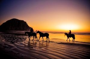 horse beach 3